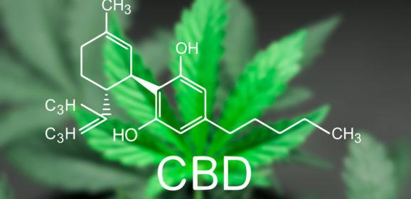 Entdecke 11 Cannabis (CBD) Weltneuheiten
